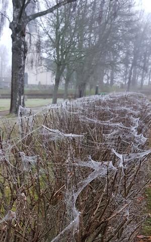Naturens egen halloweenutsmyckning. Vid Fläckebo kyrka den 1 november. Foto: Inger Westlund