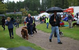 Över 2000 hundar ställs ut under helgens hundutställning på Solberga IP.