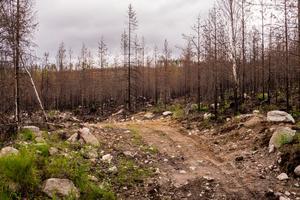 Delar av brandområdet Fågelsjö/Lillåsen ett år efter branden. Totalt brann cirka 5000 hektar.