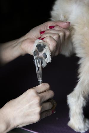 Många hundar har långt hur som korvar ihop sig i tassarna. Detta kan klippas bort för att hunden ska slippa få svamp och ont i tassarna.