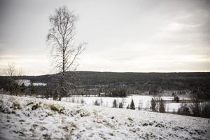 Utsikt över Borgsjön.