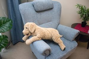 Mjuka djur fungerar lugnande på ett demensboende.