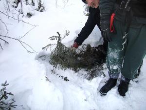 Den misstänkte mannen visar polisen var guldet fanns i anslutning till en hyrd stuga i trakterna av Ottsjö. Foto: Polisen