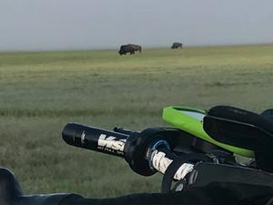 I nationalparken Yellowstone stötte Gunnar på bisonoxar. Foto: Gunnar Ohlanders