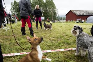 Eftersökskurser, permobjörnar och utställning var bara en bråkdel av mässans hundinriktade utbud.