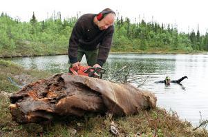 Sommaren 1999 när forskaren Björn Gunnarsson tog hjälp av gamla träd i Jämtland för att förstå tidigare klimatförändringar.