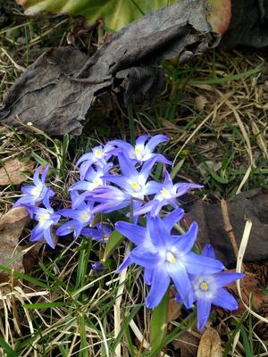 Våren tar över Roslagen. Foto: Anita Saxton