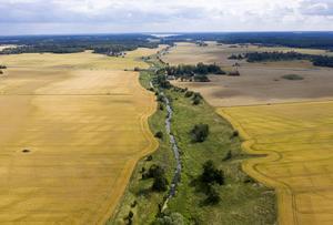 Jordbruket är ett område för ständig konflikt mellan miljöintressen, jordbrukare och politiker. Bild: Fredrik Sandberg/TT