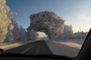 Den s.k. suptallen i Täng i vinterskrud i minus 29 grader. Foto: Åke Andersson