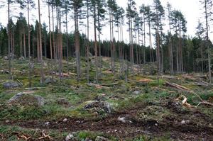 De certifierade skogsbolagen har frivilligt förbundit sig att inte avverka i nyckelbiotoper. Om så ändå sker är det en fråga för certifieringsföretagen, skriver Thomas Östlund på Skogsstyrelsen.