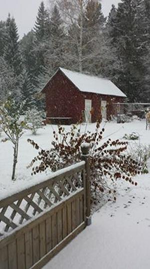 Det snöar redan längs Norrlandskusten. Så här såg det ut i närheten av Åmynnet, Örnsköldsvik vid 9.00 i morse.