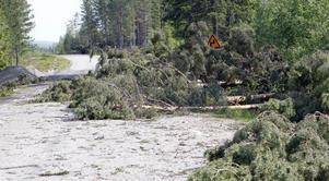 Hundratals träd lade sig över vägen söder om Karlsberg på länsväg 296.