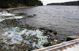 I Åkeröviken på Åstön så finns det fortfarande kvar blågröna alger som frusit fast i isen vid strandkanten.