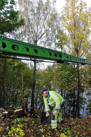 Sven-Erik Andersson hjälper till med att spänna repet kring den stora björken i bakgrunden.