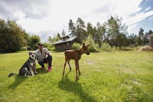 Älgkalven Ruben som har blivit vän med jämthunden Ronja. Christer Kellgren är verkligen ute på promenad med ett omaka par.