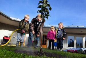 Det är viktigt att ett nyplanterat träd får rikligt med vatten. Skolpolitikern Björn Sandal (S) visar Axel Lindgren Magnusson hur man får till rätta knycken.Foto: Håkan Luthman