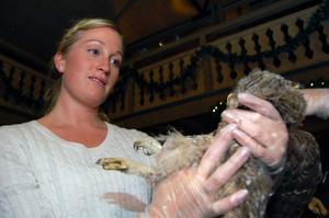 Att göra en hullbedömning av ett skadat djur ingick i kursen.