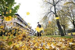 Fastighetssnabbens Martin Thorsson blåser bort löven från gräsmattan i hörnet Kaplansgatan-Norra Strandgatan.