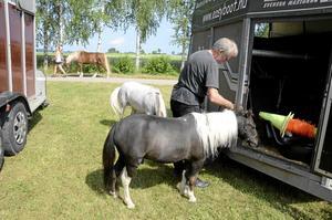 De här amerikanska miniatyrhästarna skulle senare på dagen visas fram i en köruppvisning.