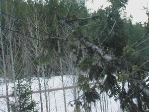 Träd som fallit över järnvägen vid Pilgrimstad. Trädet hade även fallit över kontaktledningen. /Läsarbild