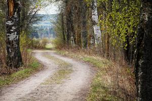 Gamla landsvägen slingrar sig genom Sässman-området. Det finns önskemål om att även kunna använda Gamla landsvägen vintertid. Därför måste vägen börja plogas igen. Någon form av gemensamt underhåll sommartid är önskvärt.