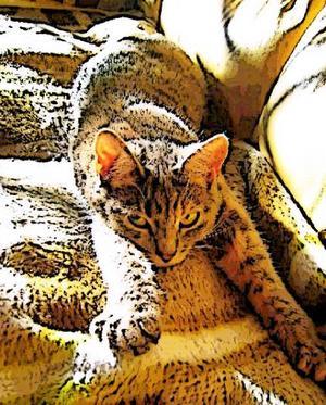 """""""Denna lilla underbara skapelse var en katt med glimten i ögat, hon hittade alltid något nytt att sysselsätta sig med vilket också innebar att man som kattägare fick lite extra städning ibland. Men vad gjorde väl det, denna katt var en liten glädjespridare som visste hur man skulle göra människan glad. Kissekatten hette Sofie och blev bara 10 månader men vilken katt, en stor personlighet i en liten katt, kommer aldrig att glömma henne."""" Foto: Susanne Elisson, Östersund."""