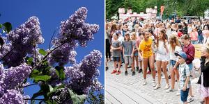 Under fjolårets sommaravslutning var Societetsparken proppad med barn och deras vuxna. Foto: Hasse Holmberg / Grethel Hjuberger