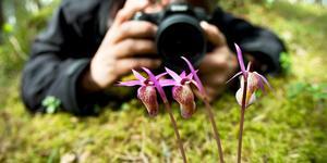 Villmyran. Gå försiktigt – här finns många fridlysta och känsliga orkidéer.