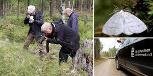 Under onsdagen genomfördes en större fjärilsvandring inom Jämtkrogens fjärilslandskap, ett nära tre mil långt område i gränslandet mellan Västernorrland och Jämtland.