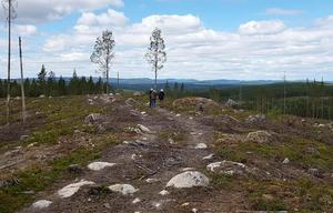 Sällskapet  fick en bra vy över Brännvinsberget där det avverkades skog 2013.Foto: Conny Hansson.
