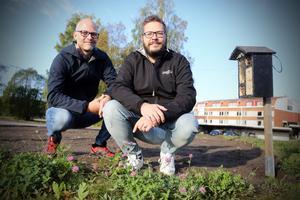 Andreas Einarsson  och Fredrik Olsson  betonar att projektet både ska spara pengar och arbete på gräsklippning, gynna ekologin och ge tankstationen en trevligare inramning.