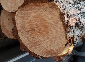 Branschfolk inom skogsnäringen samlades i Malung för att knyta kontakter.