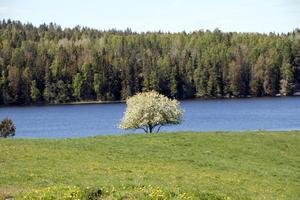 Naturen runt Lindesjön är magisk.