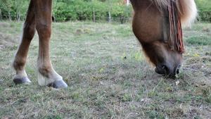 Sommarens torka har gjort att betet börjar bli magert eller helt enkelt har tagit slut. Första skörden av hö är också mager på de flesta håll i länet. Hästägare är rädda för att stå utan mat till sina hästar till vintern.