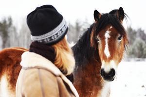 Emelie brinner för den nordsvenska brukshästen som är en hotad ras.
