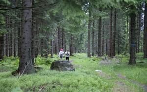 Oavsett om det är skogsindustrin i Jämtland, turistnäringen i Dalarna eller tech-startups i Stockholm behöver företagarna tillgång till kapital, rättvisa skatter och konkurrenskraftiga spelregler.