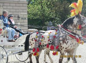 I Krakow var ståtliga och vackert prydda hästar ett inslag i gatubilden. Foto: Privat
