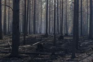 Naturvårdsverket gjorde även i samband med skogsbranden i Västmanland markbyten med drabbade skogsägare.