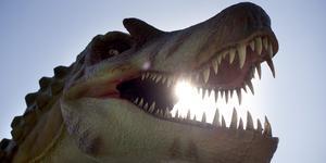 En T-rex som visats på Universeum i Göteborg. Foto: Björn Larsson Rosvall / Scanpix.