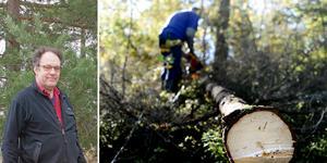 Skogskonsulent Kjell Andersson från Väddö tror att det  behövs hjälp utifrån för att klara målet med att skogen ska vara röjd till sommaren. Foto:TT/Joakim Dahlbäck