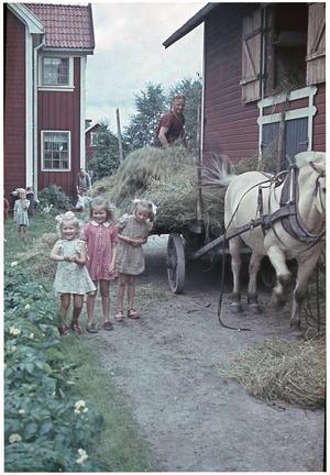 Backa Gustav Halvarsson tar in hö i Hole. Med på bilden är kusinerna Astrid, Karin, Svea, samt Backa Kerstin Eriksson och Gustavs dotter Anita. Foto: Backa Erik Eriksson