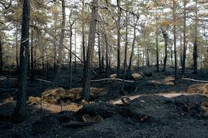 Balesudden ett par dagar efter branden 2008. Foto: Leif Wikberg