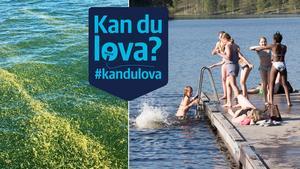 Förekomsten av giftalger hotar möjligheten att bada i Östersjön.Foto: Carina Albin och TT