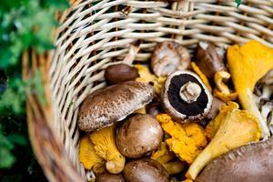 Våga variera olika sorters svamp och våga smaksätta den lite djärvare är Jens Linders bästa råd.
