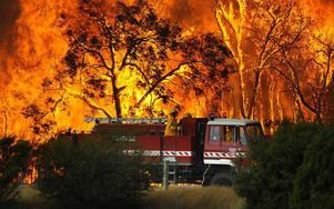 Våldsamma markbränder rasar i Australien, där värmerekord slogs i måndags. Samtidigt är landet ett av de som släpper ut mest växthusgaser i världen, så det lär inte brinna mindre i framtiden.
