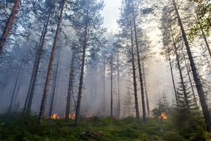 Det är just nu torrt i marken, något som gör att räddningstjänsten avråder från eldning.