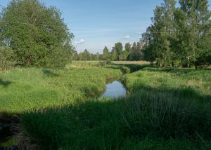 Vattendraget Svartån som rinner i Götene kommun är synbart drabbat av övergödning. Där det numera växer mängder av vass var det tidigare en öppen vattensamling. En utveckling som ser likadan ut i många vattendrag i området enligt naturfotografen Tomas Örn Karlsson.