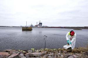 Efter utsläppet skedde en omfattande sanering av olja som flutit upp på stränderna. Bilden tog under saneringsarbetet 2019.
