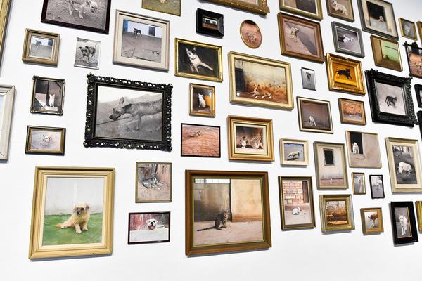 En vägg på Liljevalchs konsthall har täckts med Lars Lerins bilder av herrelösa hundar och katter. Om resten av utställningen är sparsmakad har tavlorna här fått bre ut sig på ett gränslöst sätt – helt i Lars Lerins smak.