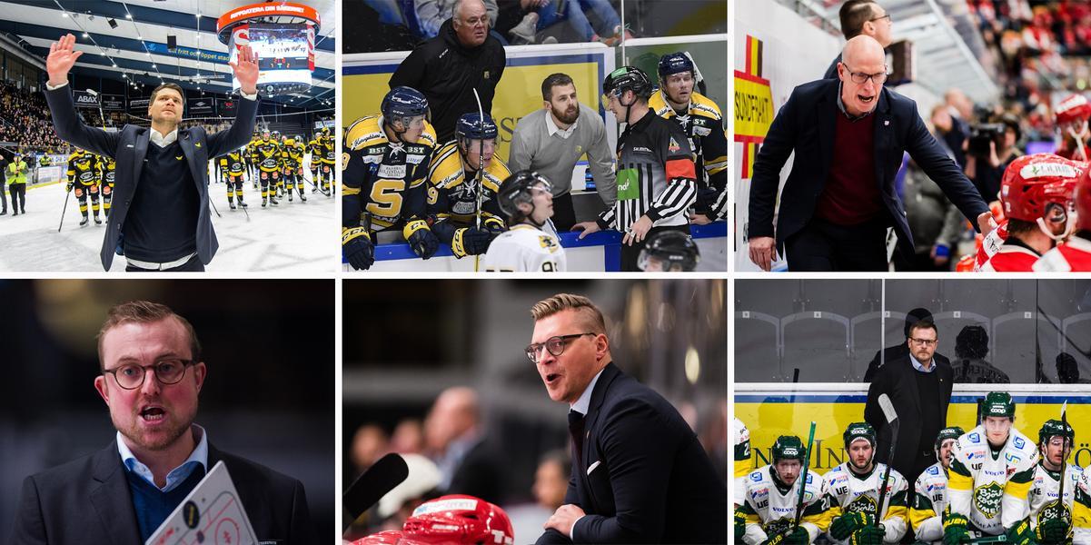 HA TOPP 14: Här är tränarna som vinner mest i hockeyallsvenskan – Timråcoachens oväntade (?) bottenplacering: